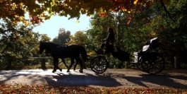Winterlicous Horse-Drawn Sleigh Ride and Dinner Package